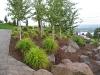 trees-grasses-camas